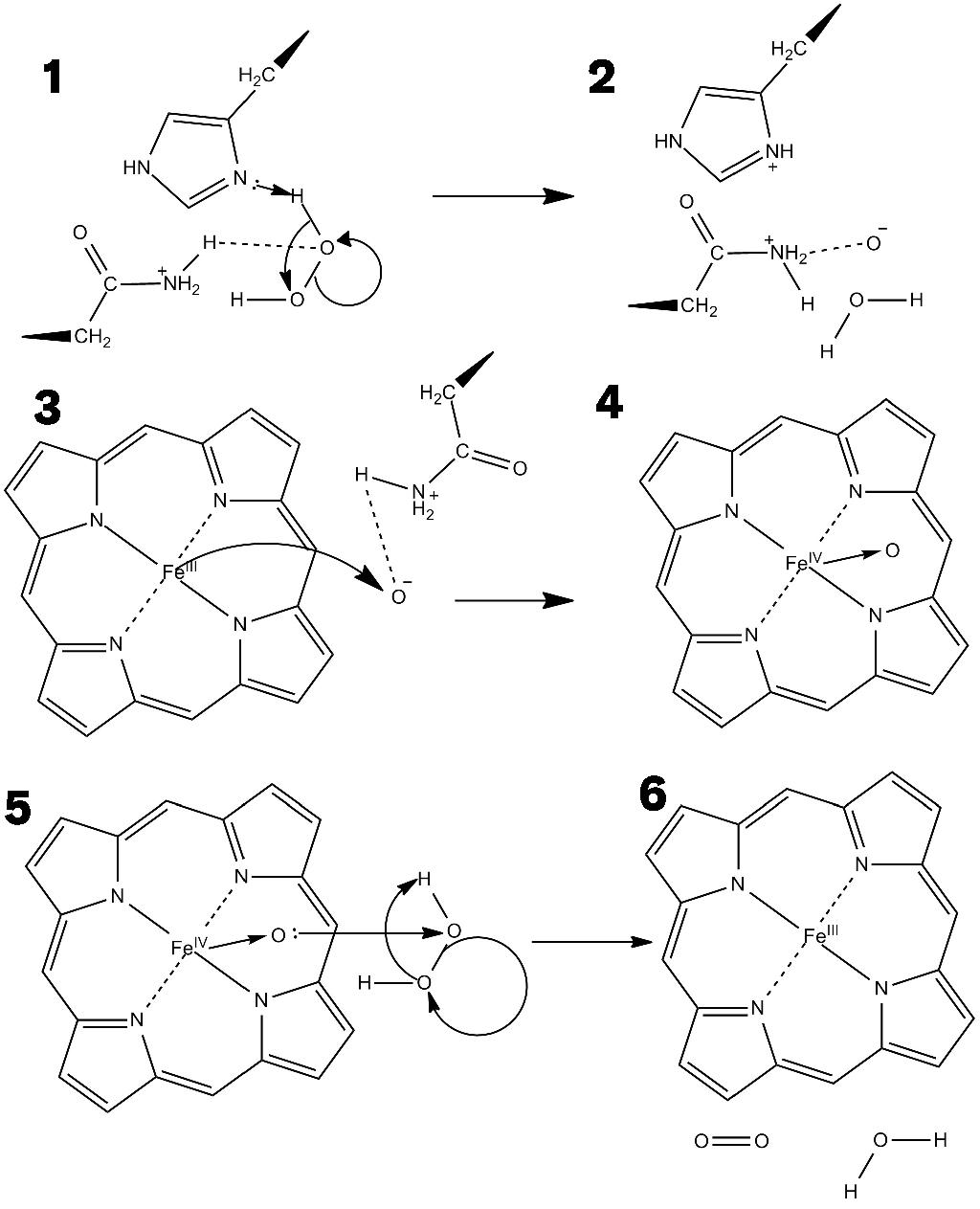 catalase reactions People invited to a presentation do not need a prezi  catylase breaks down hydrogen peroxide  up chemical reactions the faster catalase could.